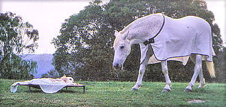 Bandit with his mate, Sparkie, the night before he died