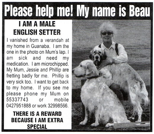 The Local Newsletter, Gold Coast, Finding Beau, Stolen Dog