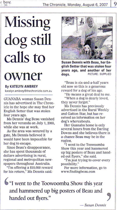 The Chronicle, Toowoomba, missing dog Beau still calls to owner, Finding Beau, stolen English Setter