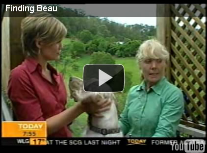 today, channel 9, national television, finding beau, stolen dog, english setter